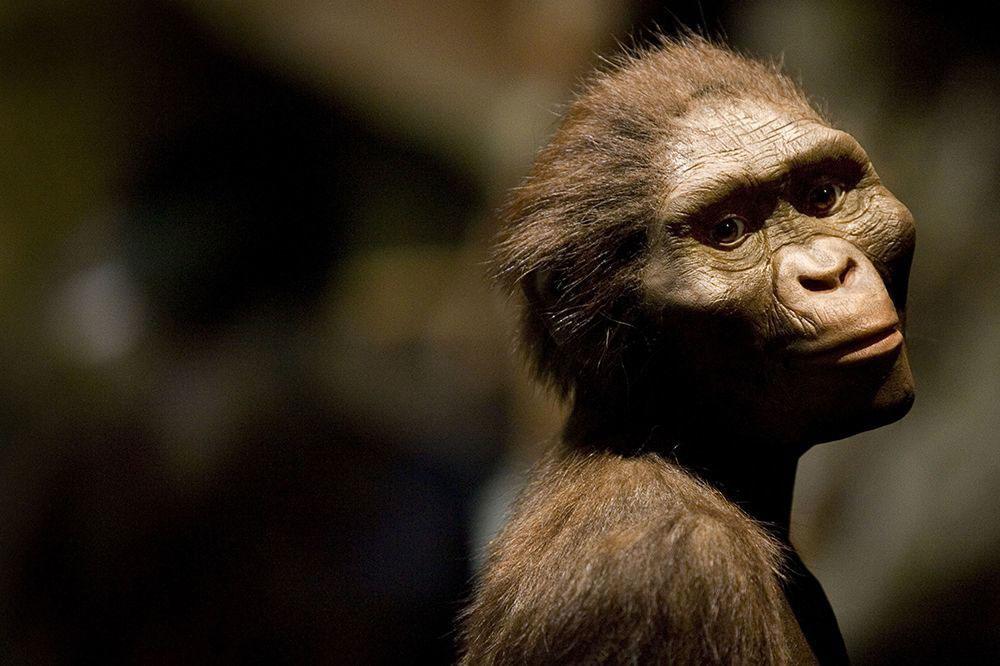 Ciri-ciri Homo Wajakensis