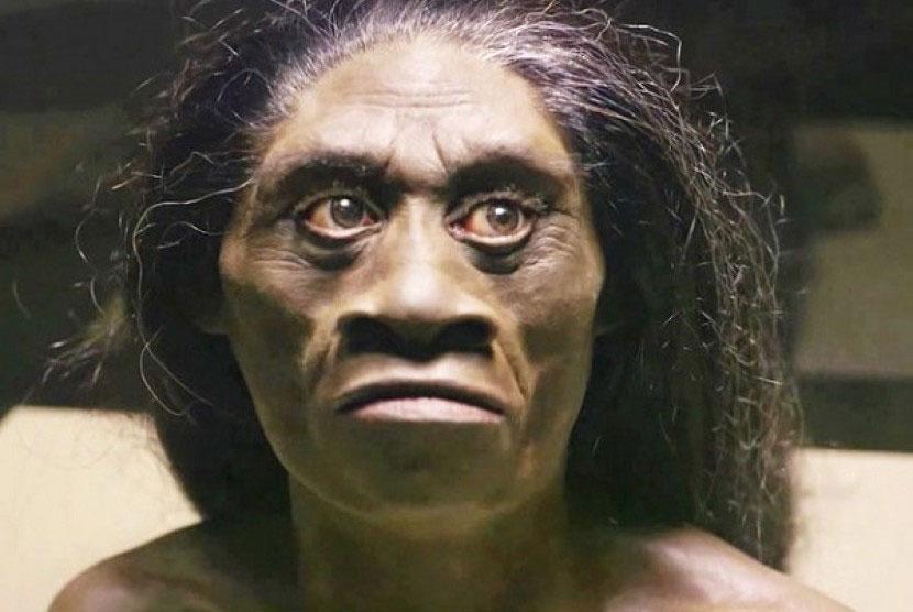 Homo Wajakensis
