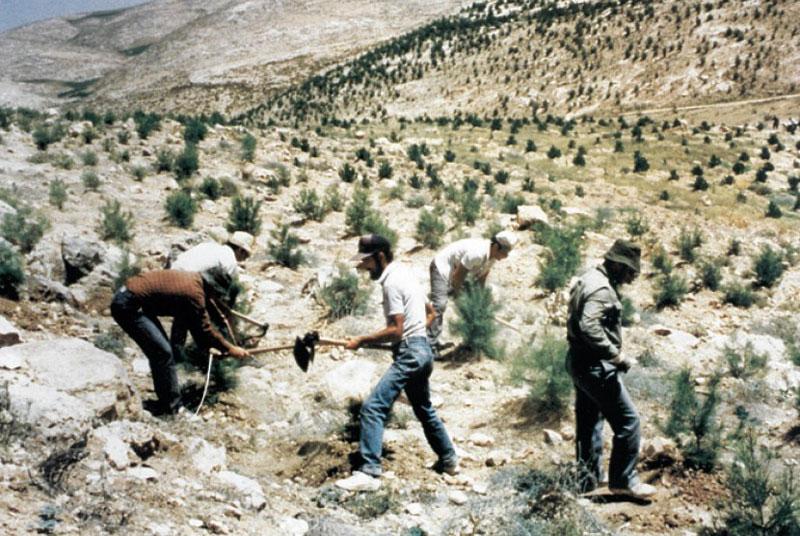 Penanaman Pohon Gharqad