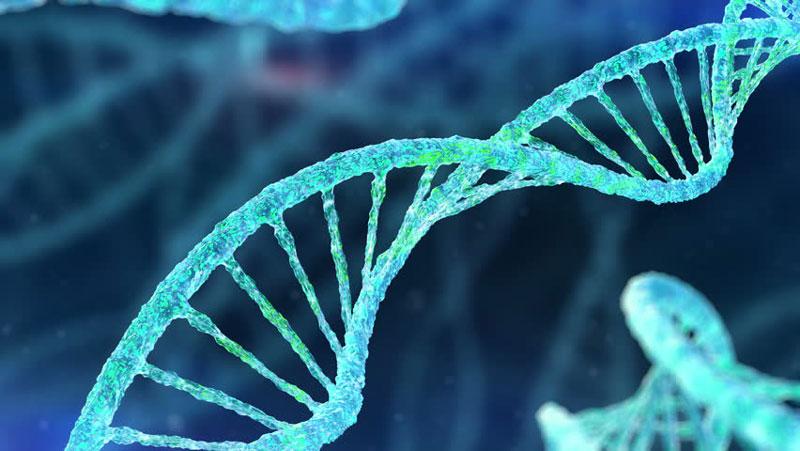 Perbedaan DNA dan RNA dalam Tubuh Makhluk Hidup