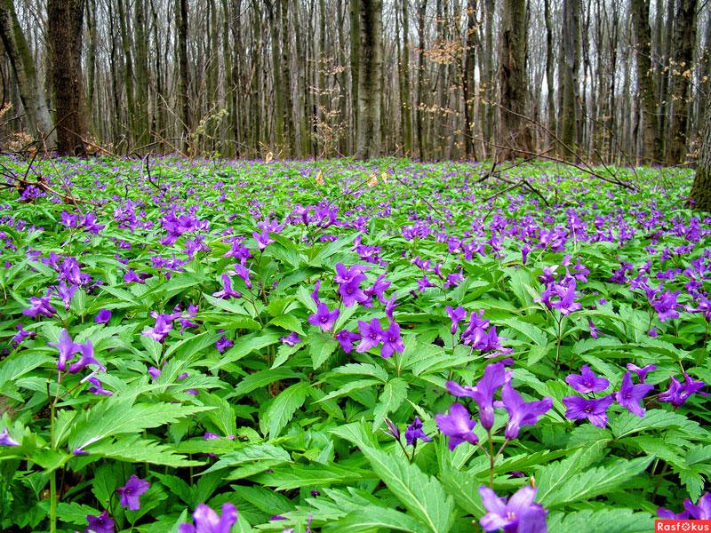 Flora Indonesia Tipe Peralihan
